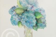 Blue Hydrangea, Spring