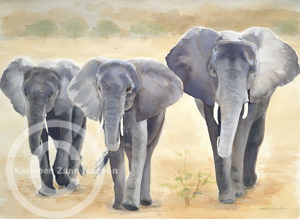 Elephants, Selous